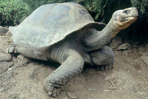 免抠动物素材图片动态乌龟
