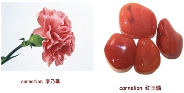 """康乃馨"",carnation"