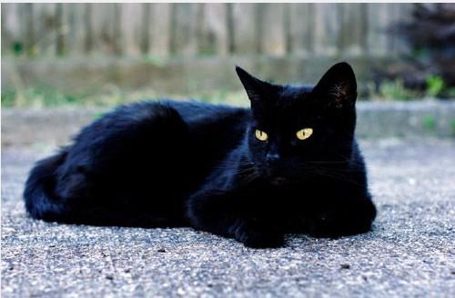 黑猫真可爱照片