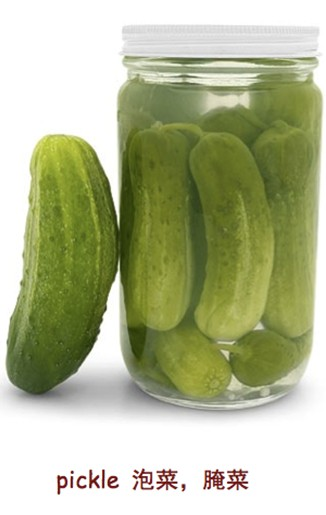 pickle 泡菜,腌菜
