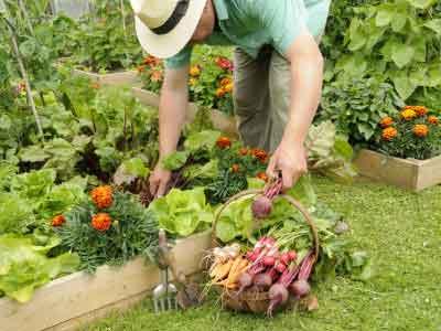 """""""从菜园到餐桌"""":城市乐活族的自给自足式生活"""