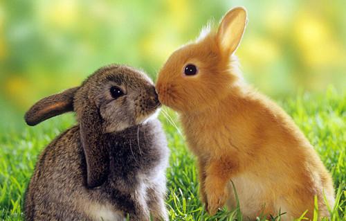 常见动物的英文名字,你能说出几个?