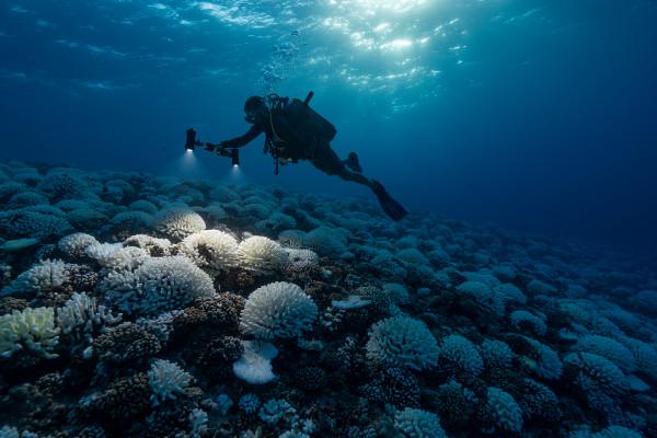 海洋正在以每秒5颗广岛原子弹的速度变暖
