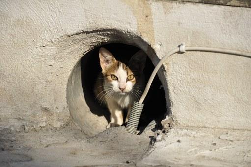 饥饿的猫有时会吃人的尸体。一个可怕的实验揭示了其中的奥秘