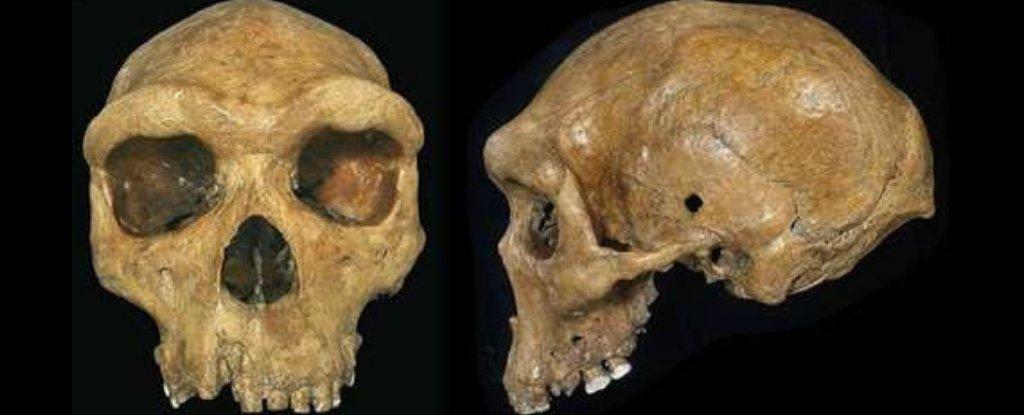 """在现代西非人的DNA中,发现了一种不为人知的已灭绝人类的""""幽灵"""""""