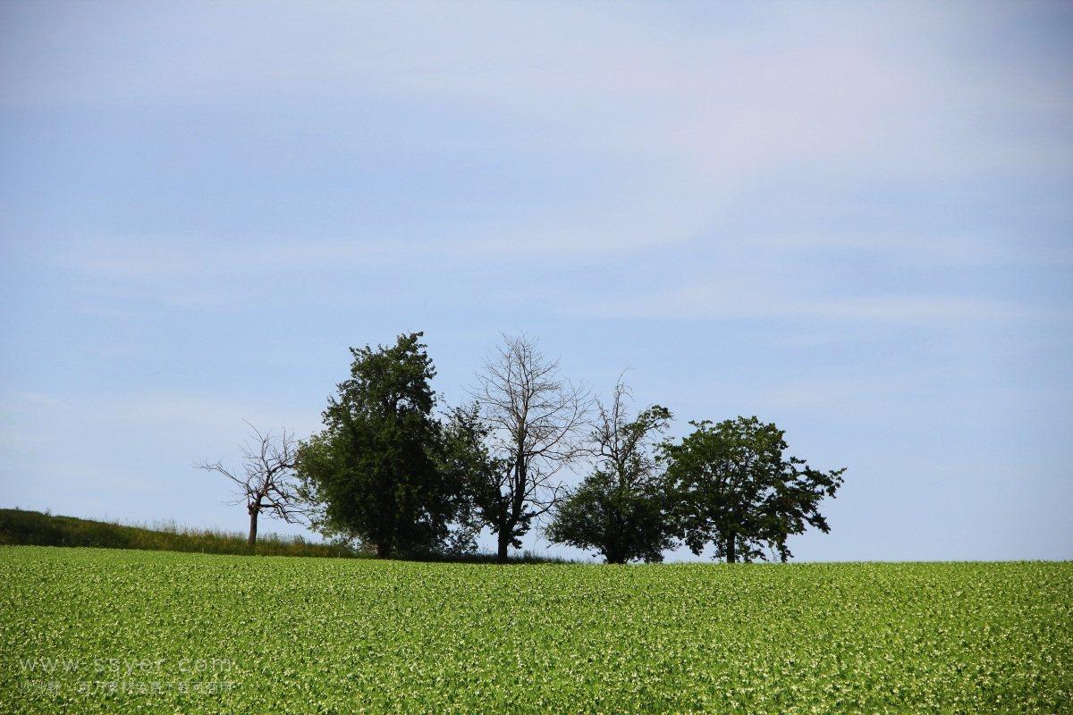 科学家们从2000年前的种子中复活了古树