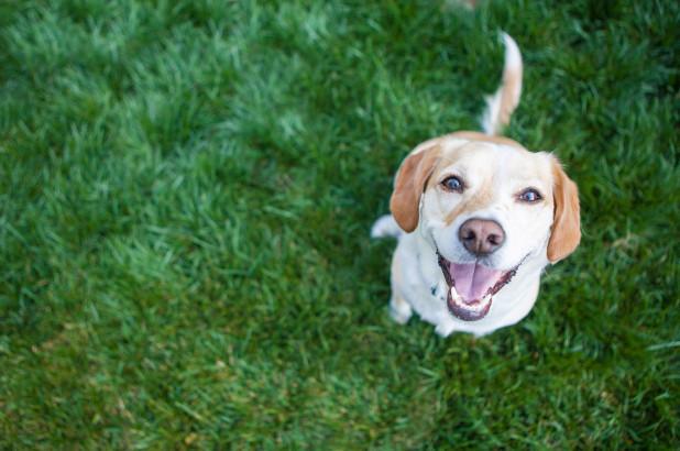 咒骂项圈,可以帮助你的狗表达它们内心的愤怒
