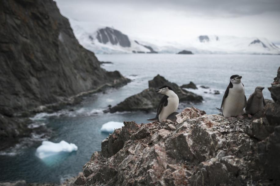 如果你�要去南极洲,请把帽子和手套留在家里