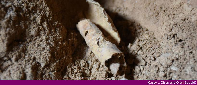 美博物馆收藏的死海卷轴碎片,竟全都是假的