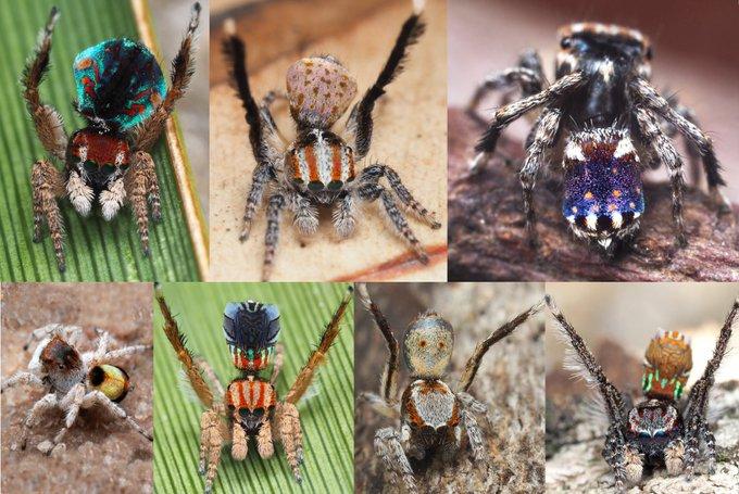 新发现的蜘蛛看起来像梵高的杰作