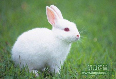 四年级英语作文:我的小兔子