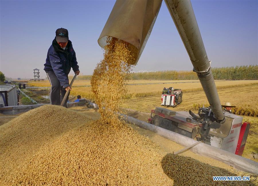 """每日一词∣补上""""三农""""领域短板  strengthen the weak links in the work on agriculture, rural areas and rural people"""