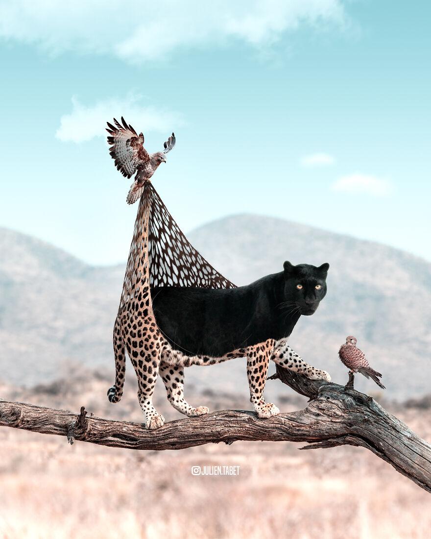 這是我想象的動物在我們看不見的時候會做的事情
