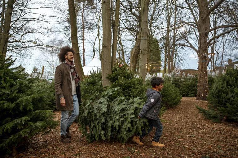 今年你可能很难找到一棵真正的圣诞树